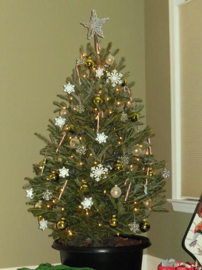 Mom's XMas Tree 2012