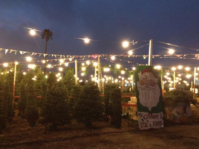 Tree lot 2012